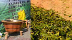 Tag 2: Geruch von frisch gerösteten Longjing, nach maschineller Vorröstung, legte ich selbst Hand an, heiße Sache!