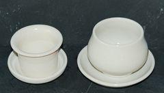 Koreanischer Teepilz