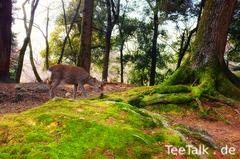 Park bei Nara