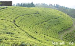 Gopaldhara Teefeld.png