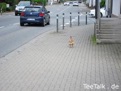 Huhn bei der Teezui 4