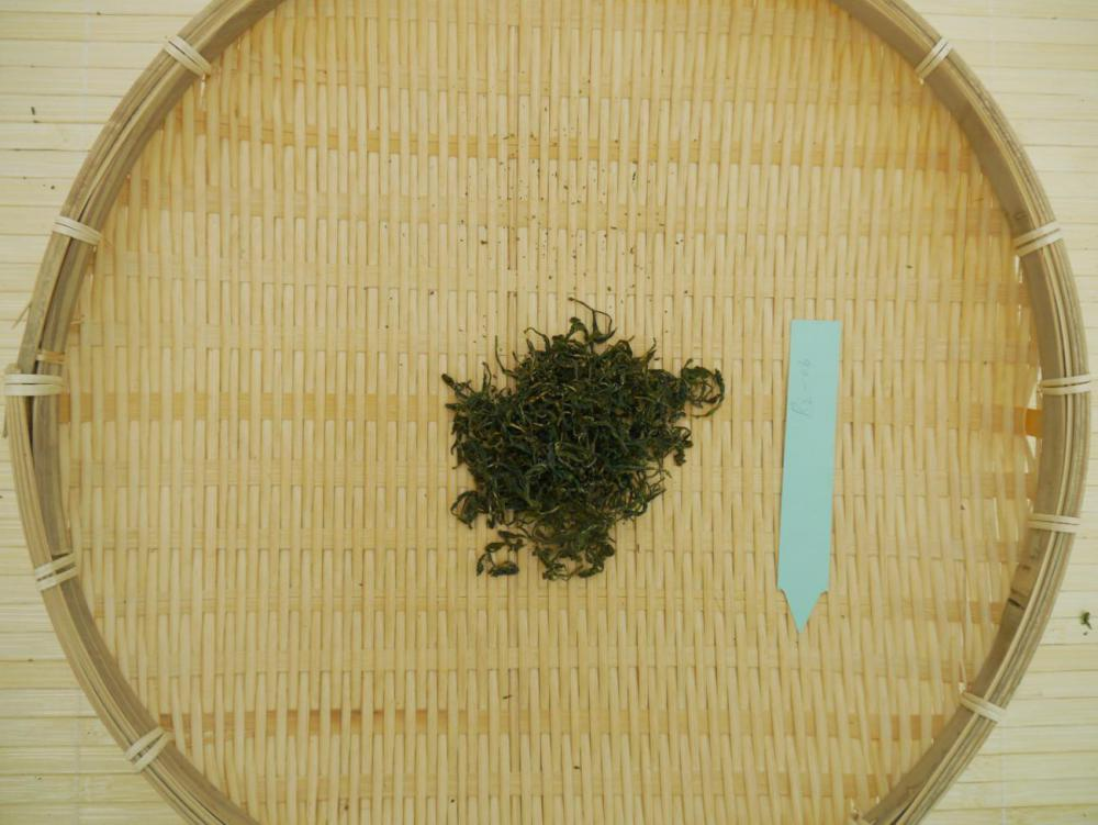 Single Tea harvest 4.06.17_07.jpg
