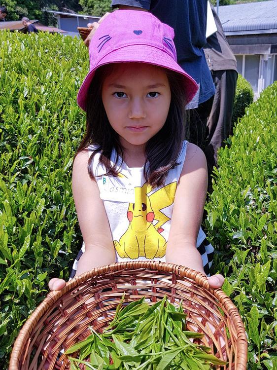 Tea-Picking-133.thumb.jpg.8da654c9504ec5139a7c68524559b075.jpg