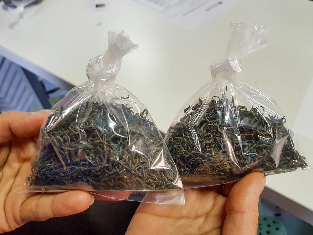 Tea-Picking-255.thumb.jpg.ee8f18e66f976a50fdd2f374c2d5eb99.jpg