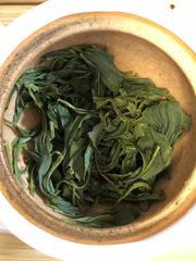 Kōshun Ōlong Tea nasse Blätter