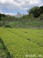 Teefeld in Kyokushi 2